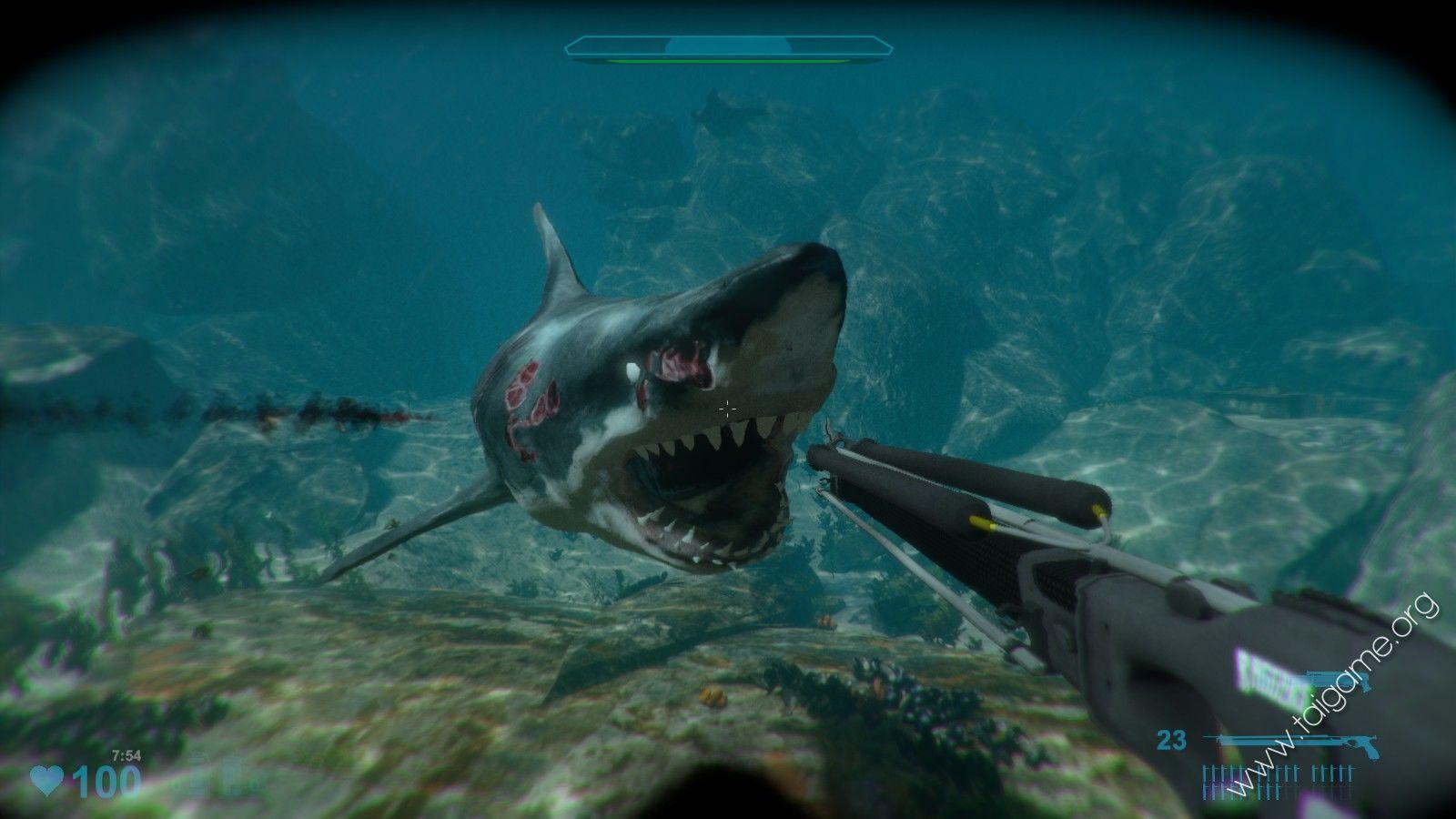 Shark Games - Free Online Shark Games