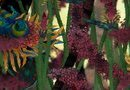Morphopolis picture1